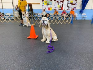Hoshi by orange training cone